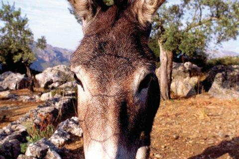 Faune sauvage de Majorque. (© Author's Image)