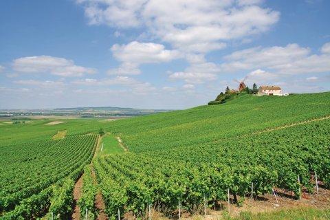Vignoble de Verzenay (© travelpeter - Fotolia)