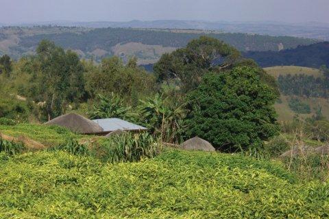 Un rugo dans le Mugamba. (© Christine DESLAURIER)