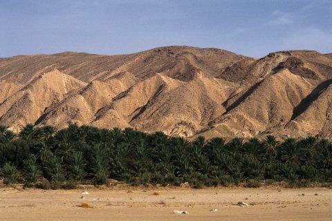 Oasis de la région de Chebika. (© Author's Image)
