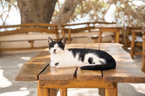 La vie paisible des chats crétois. (© Natalia BRATSLAVSKY - iStockphoto)