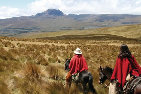 Alpagas sur les flancs du Cotopaxi. (© Stéphan SZEREMETA)
