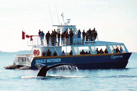 Observation des baleines de la baie de Fundy. (© Tourisme Nouveau-Brunswick)
