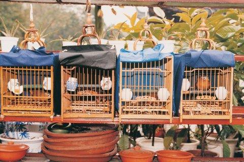 Au marché aux oiseaux de Canton. (© Miguel POIRIER)