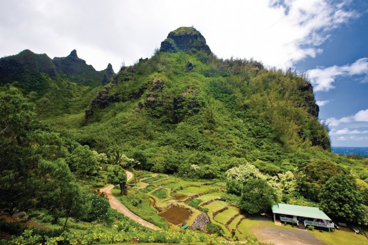 Hawaï, guide touristique Petit Futé