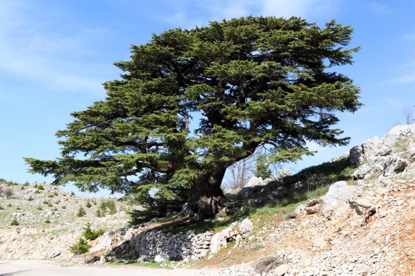 Liban  Le Liban En 40 Mots