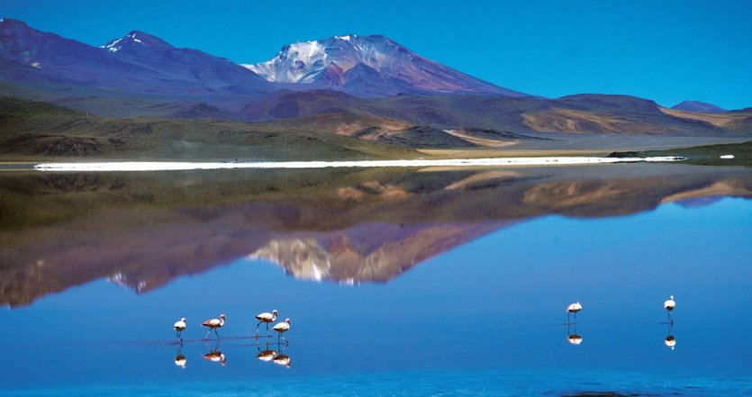 Flamants roses dans la laguna Colorada.