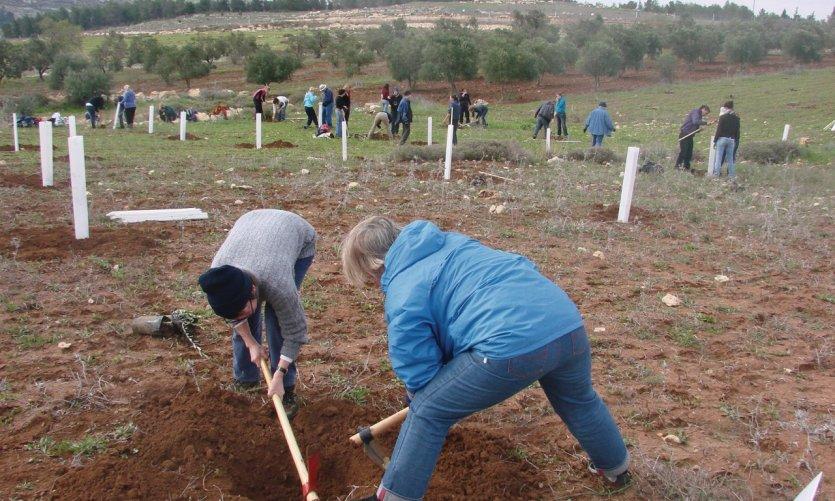 Plantation d'arbres par les membres d'Alternative Tourism Groupe dans un champ palestinien.