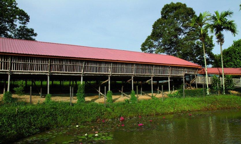 Chambres en longhouse du Sabah Tea Garden