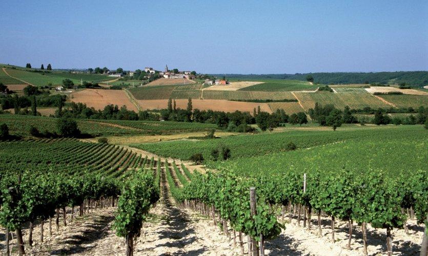 Vignoble de Gaillac