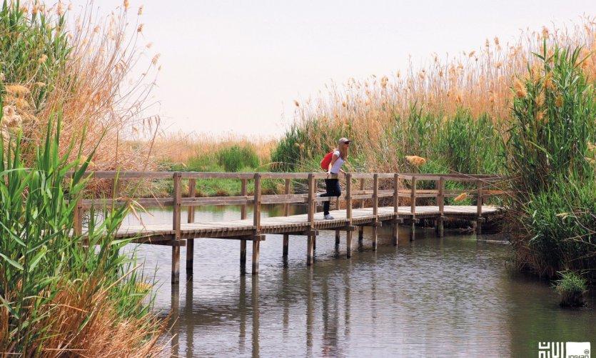 Un paso de madera en la reserva húmeda de Azraq.