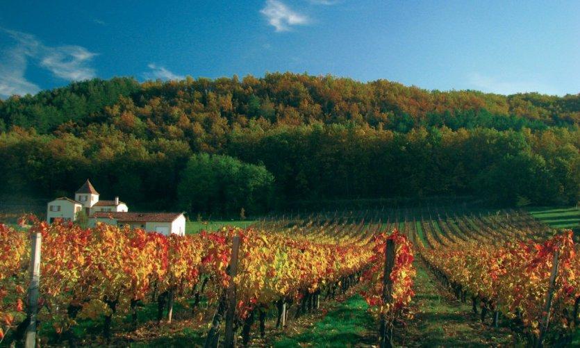 Vignoble - Dordogne