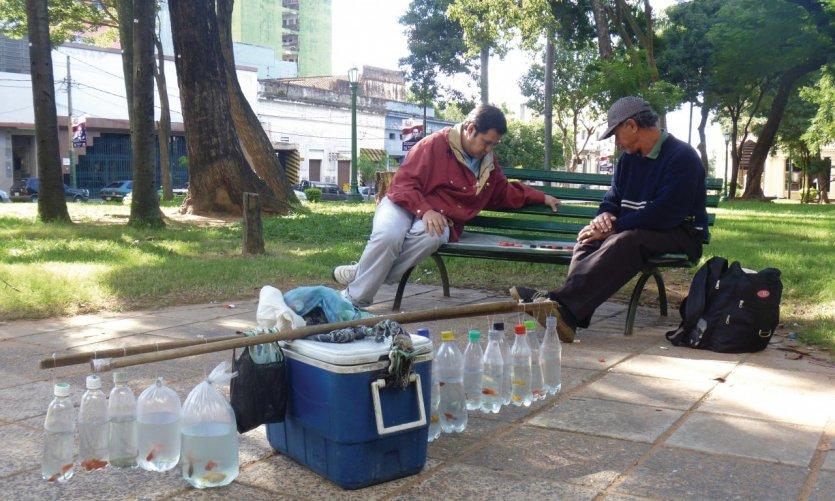 Pause et partie d'échecs pour le vendeur de poissons rouges sur la Plaza Uruguaya, Asuncinón.