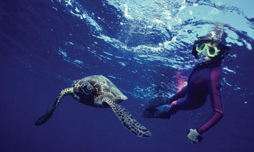 Submarinismo en las aguas hawaianas.
