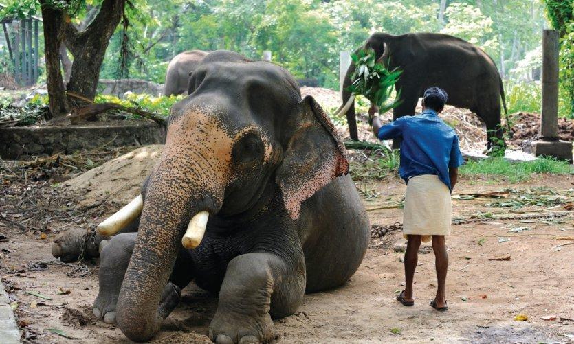 Parc des 64 éléphants du temple de Krishna