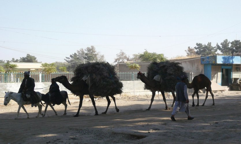 Sherberghan, caravane de chameaux.