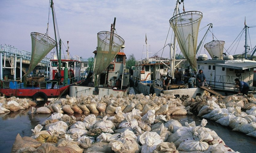 <p>Port maritime de Bandar-e Anzali.</p>