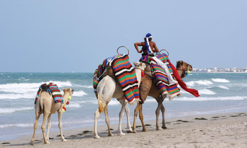 Chameaux sur la plage de Djerba.