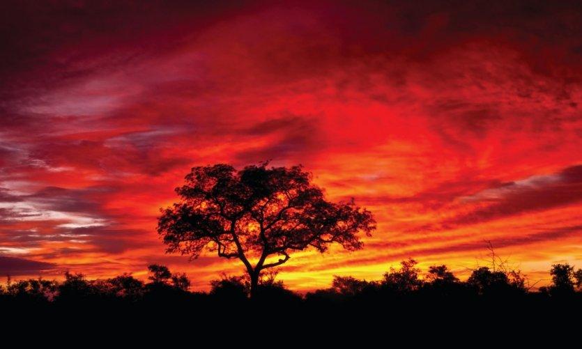 Coucher de soleil dans le Parc Kruger.
