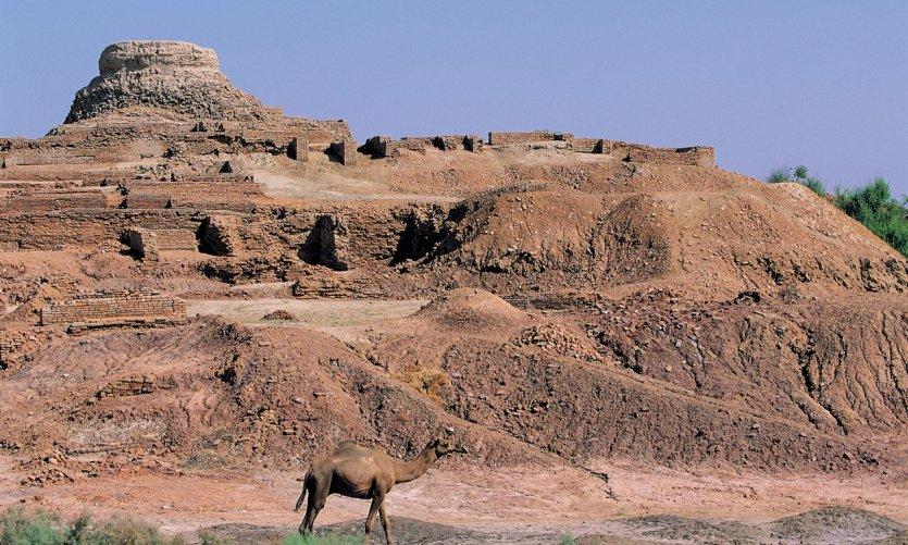 Dromadaire devant les ruines archéologiques.