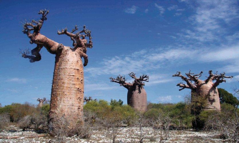 Baobab près d'Andavadoaka