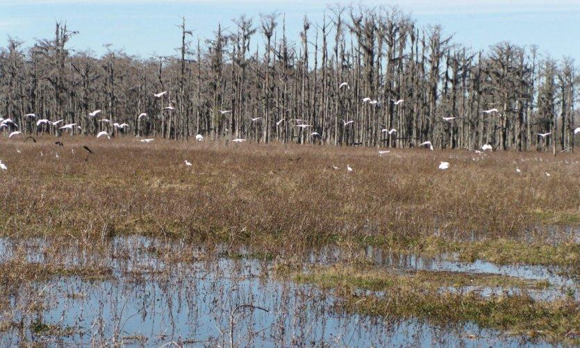 Swamp tour dans la région de Houma.