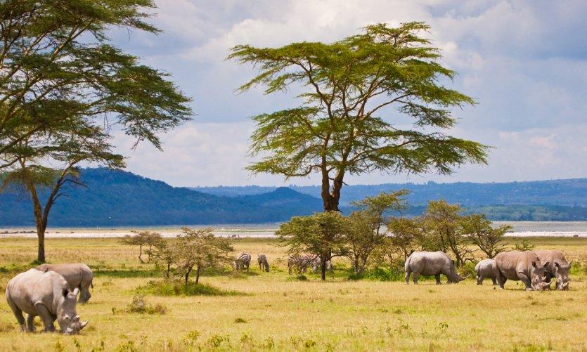 A proximité du Lac Baringo.
