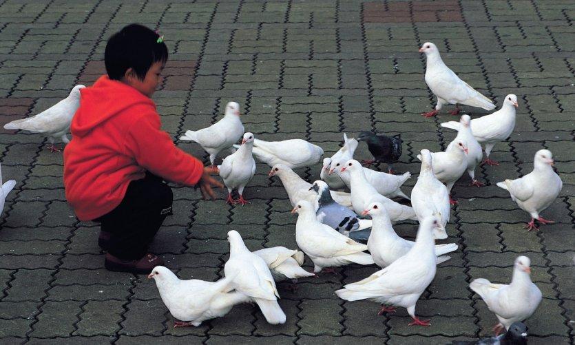 Place du peuple, enfant et colombes.