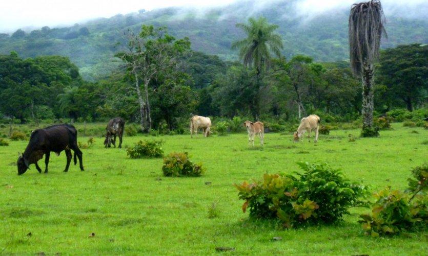Pastures at Caldera.