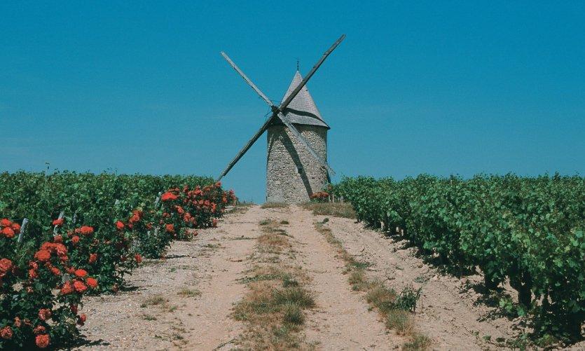 Moulin dans le vignoble du Médoc.