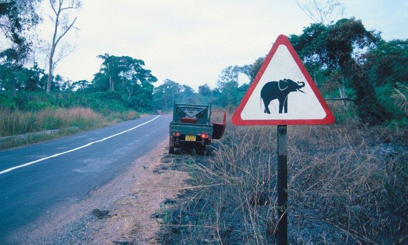 Panneau routier attention aux éléphants.