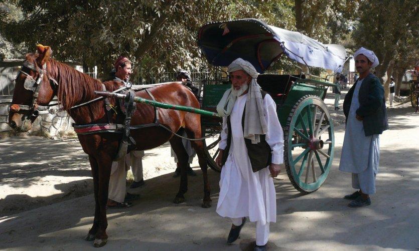<p>Horse carts, Balkh taxi.</p>