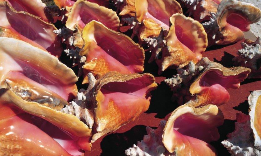 Coquillages vendus comme souvenirs sur les marchés de la Guadeloupe.