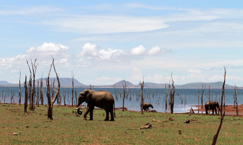 Matusadona National Park.