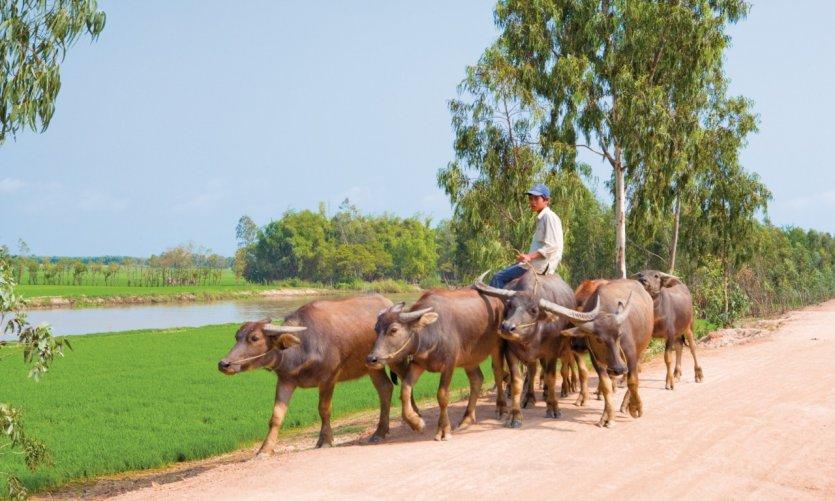 Région de Tinh Biên.