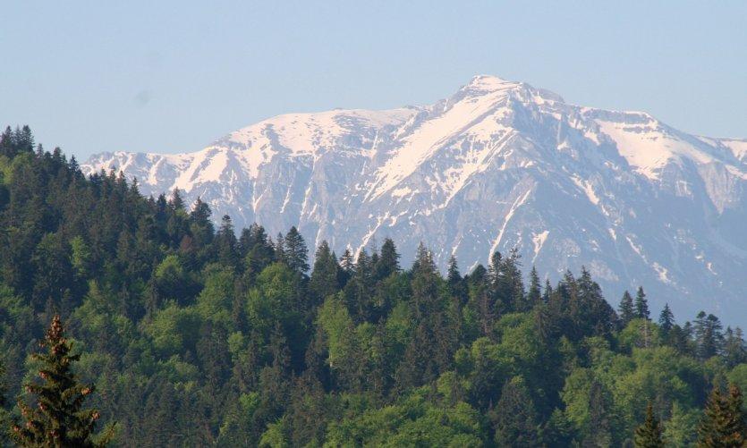 Épaisse forêt de conifères et sommets enneigés dans la région de Poiana Braşov.