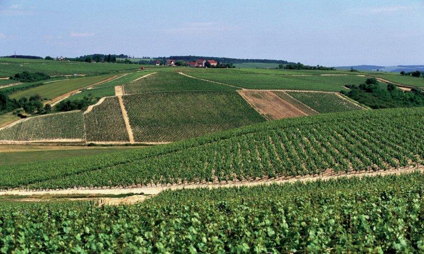 Vignoble de Chablis.