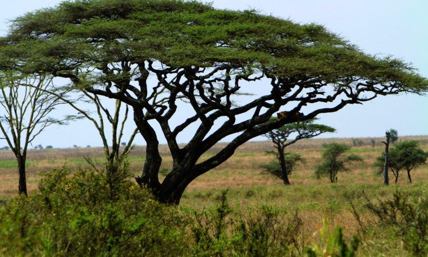 <p>Parc National du Serengeti</p>