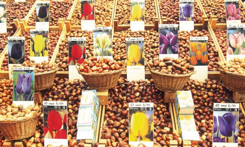 Le Bloemenmarkt invite à essayer des centaines de plantes différentes.