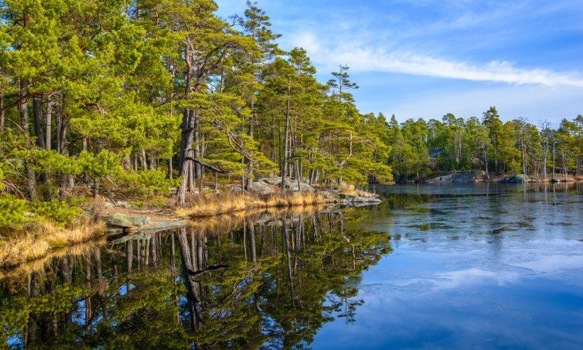 Tyresta National Park.