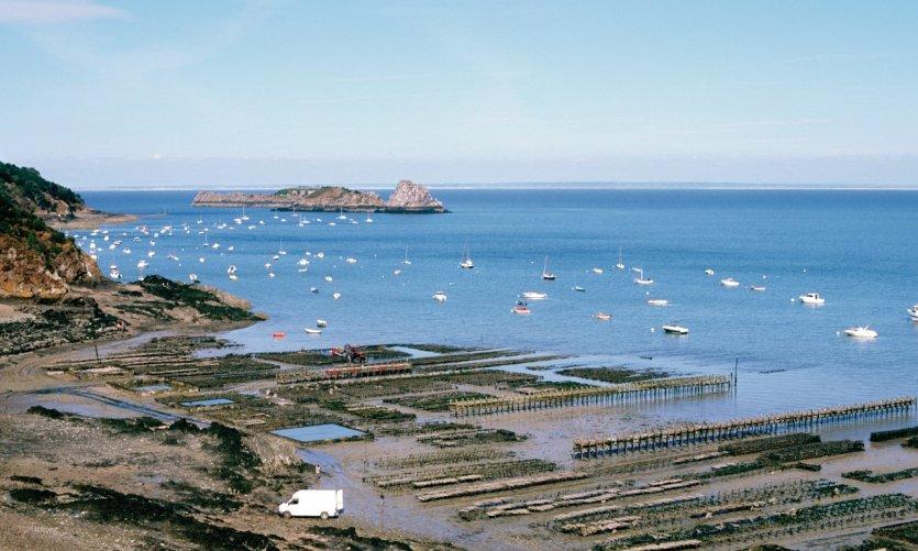 Cancale guide actualit adresses avis petit fut - Restaurant l huitre y est port des barques ...