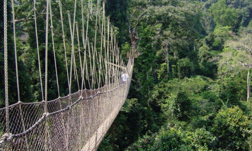 Parcours du Canopy au Kakum National Park.