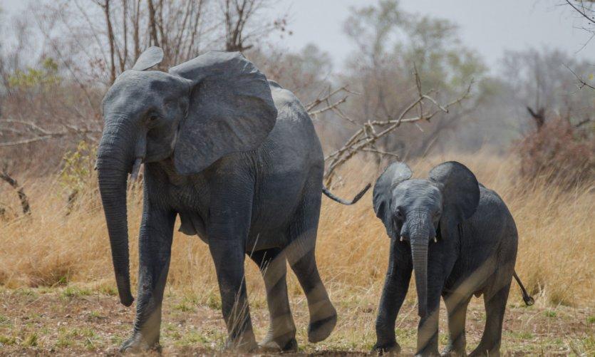 <p>Elefantes en el Parque Nacional Pendjari.</p>