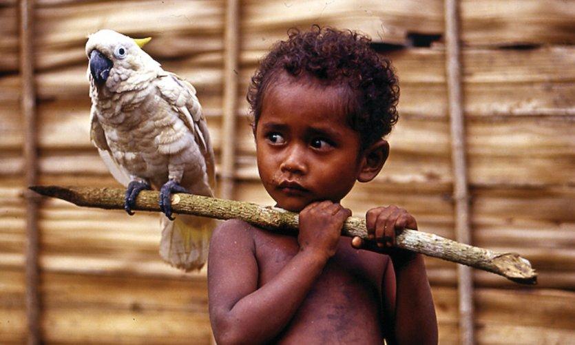 Enfant et son cacatoès.