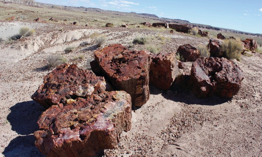 <p>Petrified Forest is a truly separate national park that deserves a detour.</p>