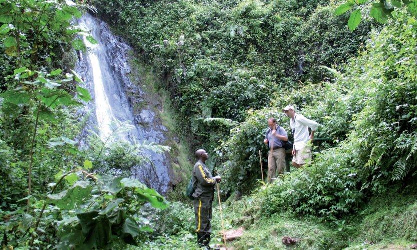 Cascade dans la forêt de Nyungwe.