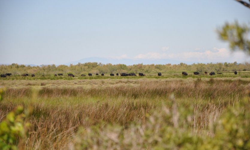 Sentier Herde - prairie Arlésienne