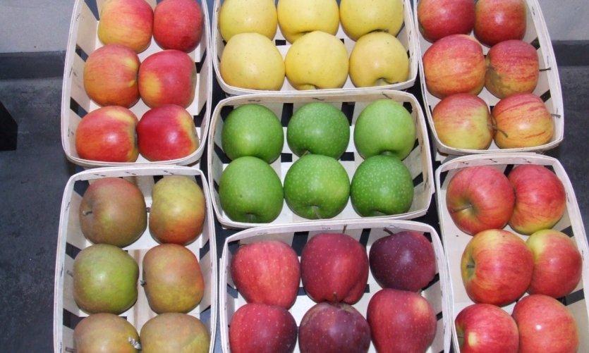 Les pommes du Berry.