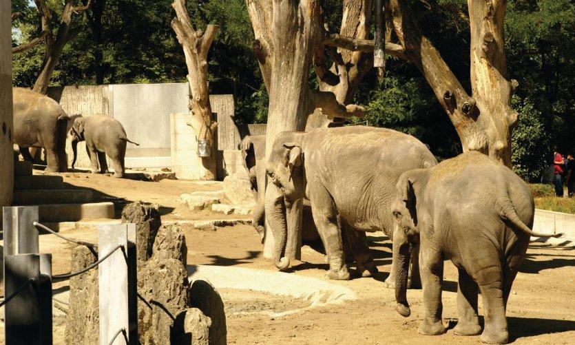 <p>Zurich Zoo.</p>