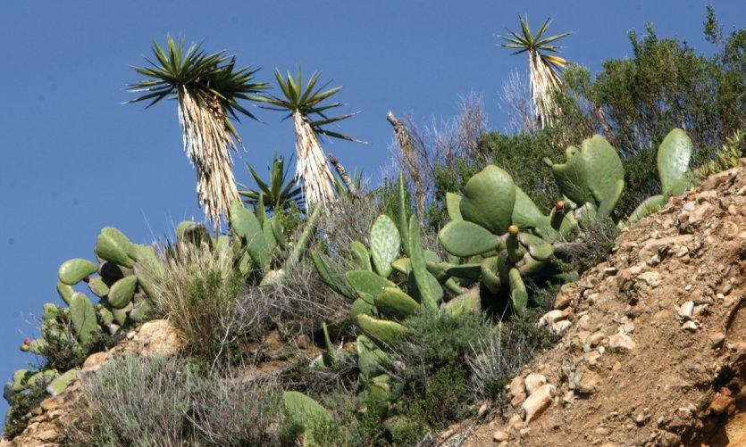 Végétation aride le long de la côte.